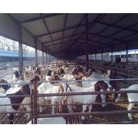 Cheap Anti Corrosive Agricultural Steel Frame Buildings Galvanized Steel Cowshed Easy Installation for sale