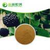 Cheap 2019 Nutral herbal medicine Acanthopanax P.E. Eleutheroside (b+e) 0.8% for health for sale
