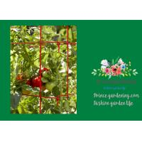 Cheap Powder Coated Steel Support For Tomato Plants for sale