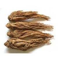 Quality Angelica sinensis Extract wholesale