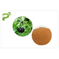 China Siberian Ginseng Powdered Herbal Extracts Acanthopanax Senticosus Eleutheroside B/E on sale