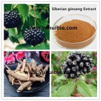 Cheap acanthopanax senticosus extract,acanthopanax extract,siberian ginseng p.e for sale