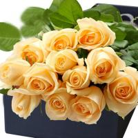 China China High quality fresh rose flowers  Peach Snow Mountain ROSE for wholesale fresh cut flower  rose on sale