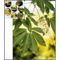 Cheap Horse Chestnut Extract for sale
