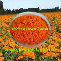 Cheap Marigold Flower Extract (Zeaxanthin 5%-60%) for sale