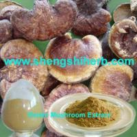 Cheap Reishi Mushroom Extract for sale