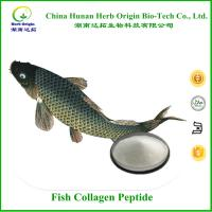 Fish Collagen Peptide 99%