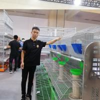 Cheap Hot Galvainzed rabbit farming equipments 2tiers 12nest mother rabbit battery cage for sale