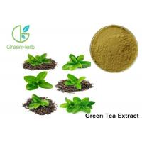 China Low Caffeine Green Tea Extract Powder Antioxidant Lowering Blood Fat on sale