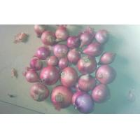 Cheap Fresh White / Red Asian Shallots Bulbs Natural / No Pollution for sale