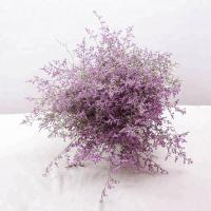 China Fresh promotional fresh cut flowers   limonium Love grass hot selling on sale