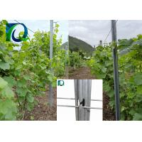 China C Type Metal Vineyard Trellis Posts 275G/M2 Hot Galvanized Easy Set - Up on sale