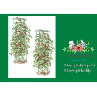 Cheap Heavy Duty Metal Tomato Cages for sale