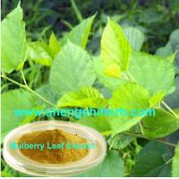 Cheap Mulberry Leaf Extract for sale