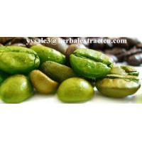 China Green Coffee Bean Extract Chlorogenic acid 10%-50% Yellow Brown fine powder, herbal extract manufacture, Yongyuan Bio on sale