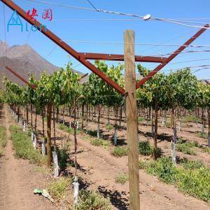 China Farming Metal Open Gable Trellis System Vineyard Poles For Vine Plants on sale