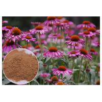 Purple Coneflower Antibacterial Plant Extracts With Chicory Acid Brown Powder