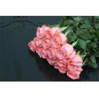 China China High quality fresh rose flowers for wholesale fresh cut flower Daiana rose on sale
