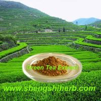 Cheap Green Tea Extract for sale