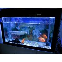 Cool fish for tanks cool fish for tanks for sale for Cool fish for sale