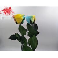 China High-quality fresh preserved flowers ecuador long stem preserved rose wholesale gift on sale