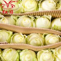 China China High quality fresh rose flowers Snow Mountain ROSE for wholesale fresh cut flower  rose on sale