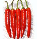 Jinta Chili/Chilli Pepper