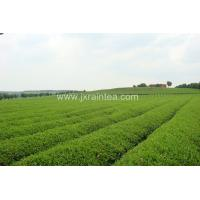 Jiangxi Rain Tea Co.,Ltd