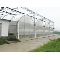 China Double Layer Dutch Bucket Commercial Hydroponic Greenhouse For Tomato Planting on sale