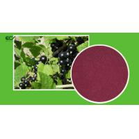 Cheap Ribes Nigrum L Organic Food Ingredients Blackberry Fruit PowderWith Flavonoids for sale