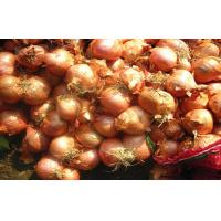 Cheap Authenticated Non-Peeled Red Asian Shallots Fresh Contains Flavonoids for sale
