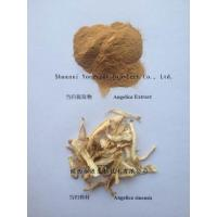 China 100% Natural Chinese plant Angelicae P.E. Dong Quai Root P.E. Extract 1%/0.5%/ 10:1 on sale