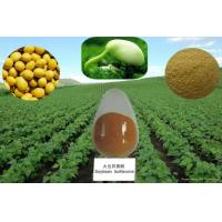 Cheap 100% Natural 40-80% Isoflavones Fine Powder Soy Extract --Glycine max (L.) Merri for sale
