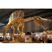 Cheap Huge Complete Dinosaur Fossil Model For Shopping Mall / Open Air Museum for sale