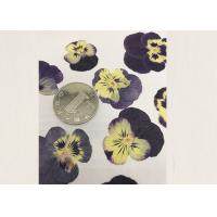 Cheap Purple Pansy Real Pressed Flowers True Plant Material For Press Picture Ornaments for sale