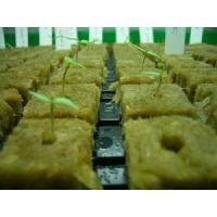 China Planting Hydroponic Rockwool Grow Cubes 60kg /m3 50mm - 100mm Thickness on sale