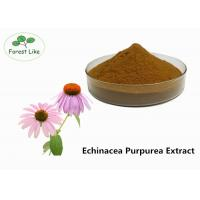 Quality Echinacea Extract Powder 2% Cichoric Acid wholesale