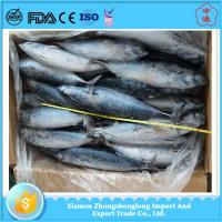 Best Quality of Cheap Frozen Seafoood Whole Round Bonito Fish for Sale.