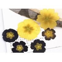 Buy cheap Primula Auricula Yellow / Black Real Pressed Flowers Resin Phone Case For Aroma Candle Decoration from wholesalers