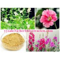 Chinese manufacturer supply  Althaea Officinalis Root Extract with competitive price, ISO Certified, 100% natural