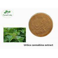 China Pure Natural Plant Extract Powder / Health - Care Urtica Cannabina Extract Powder on sale