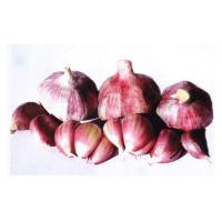 Cheap Export Products GARLIC for sale