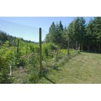 Cheap Virtually invisible and reinforced edge deer fences for sale