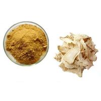 China Standard Herb Extracts Dong Quai Extract on sale