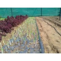 Cheap Black Mulch Film for sale