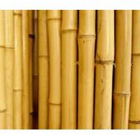 Cheap Wholesale Natural Yellow Bamboo Poles For Supporting Plant for sale