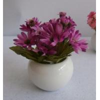 Cheap THREAD ROD SS 304 SPRING NUT Daisy in round ceramic pot for sale