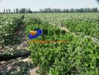 Buy cheap PE irrigation pipe from wholesalers