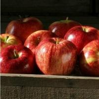 Cheap GALA APPLES NO.31 deliver gift hamper to shenzhen for sale