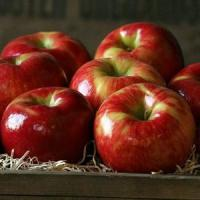 Cheap HONEYCRISP APPLES NO.32 deliver gift hamper to shenzhen for sale